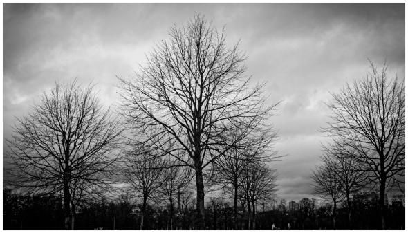 Hyde Park Trees